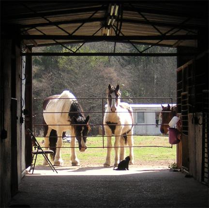 DD and her colt looking in the barn.